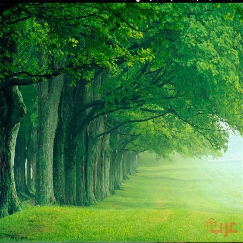 الغابة الخضراء في المنام