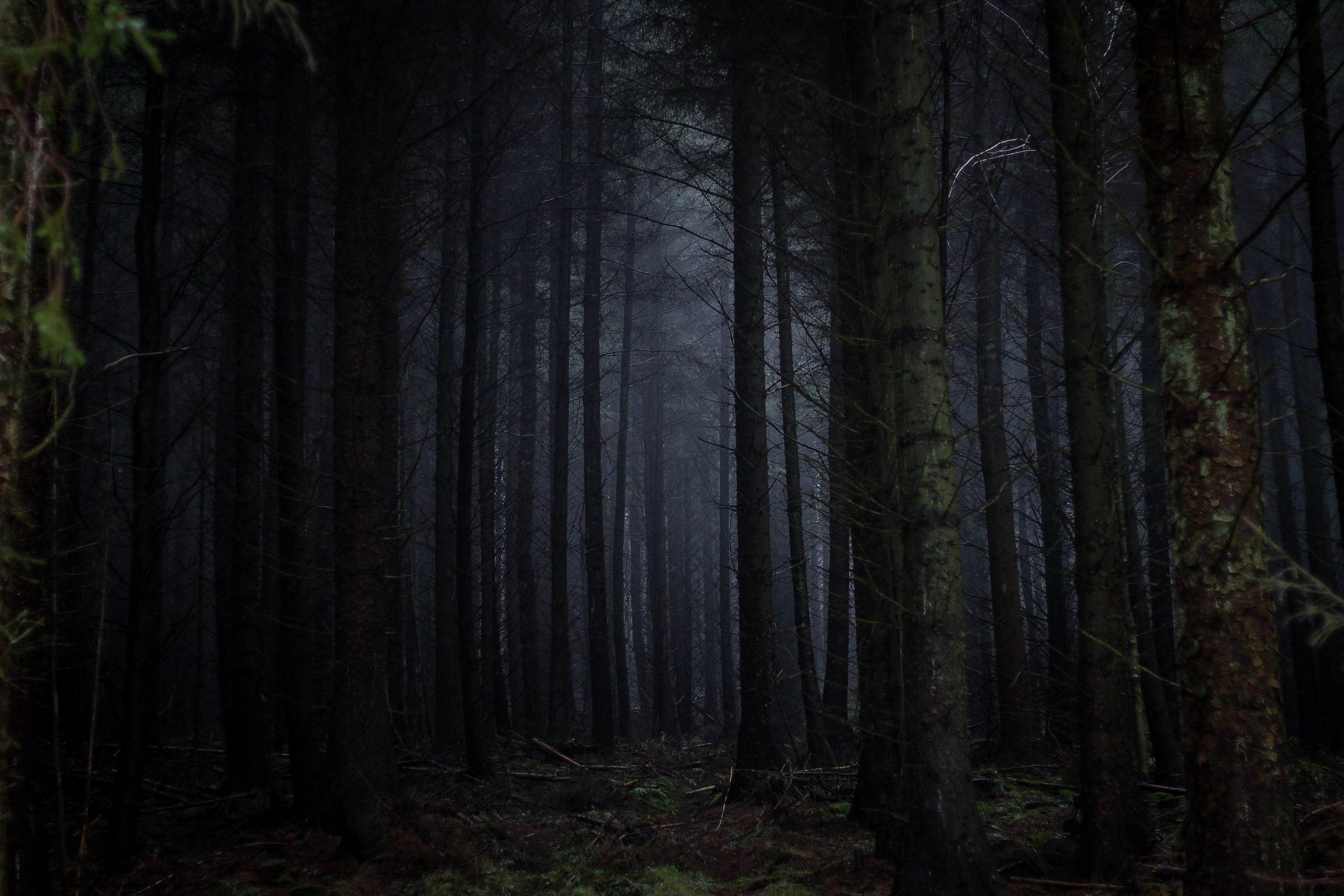 الغابة المظلمة في المنام