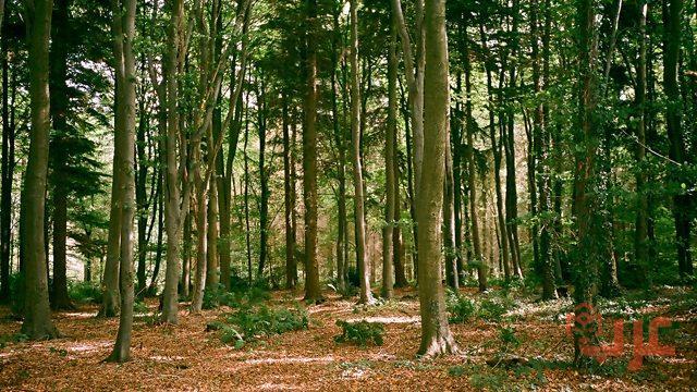 الغابة في المنام