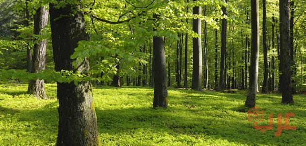 تفسير حلم الغابة في المنام