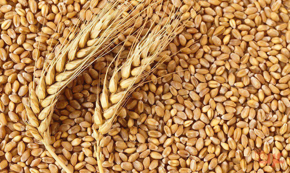 رؤية حبوب القمح في المنام
