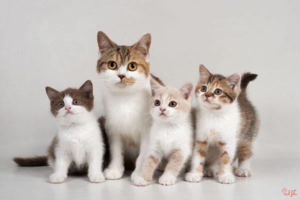القطط في المنام
