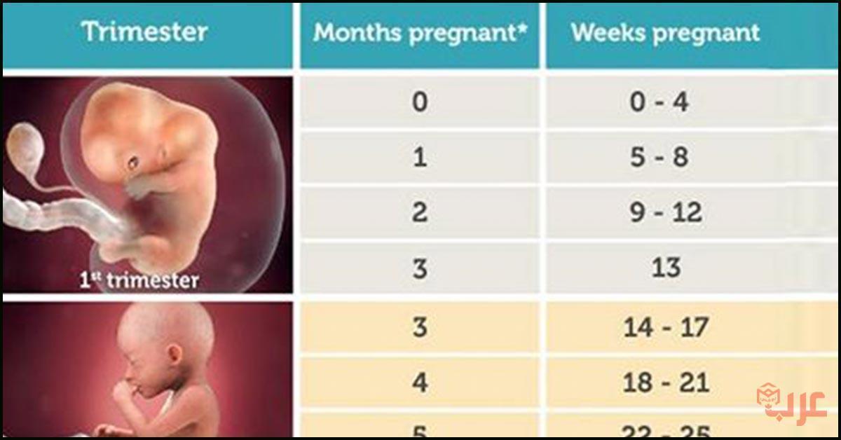 طريقة حساب الحمل بالاشهر والاسابيع عرب بوكس